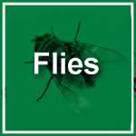 Fly Control, Pest Control, Flies, Kill Flies, Get Rid Of Flies, Service Master