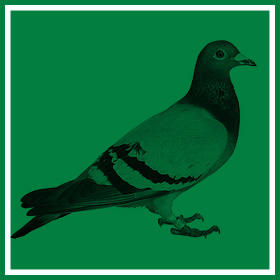 Bird Proofing & Control - Common Pests & Pest Control - Service Master