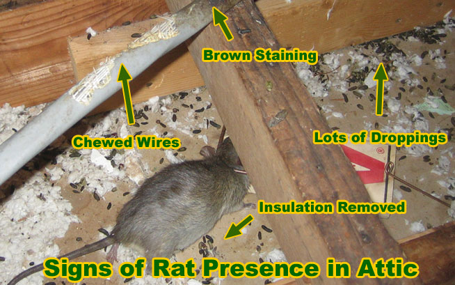 Rodent Control Services In Kwa Zulu Natal