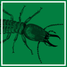 Termite Control - Common Pests & Pest Control - Service Master