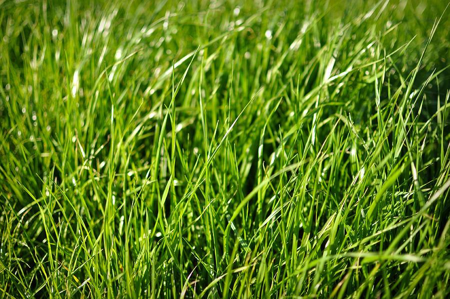 green-grass-background-brandon-bourdages