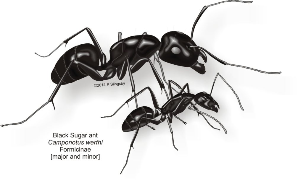 Ant Control & Solutions South Africa - Service Master Durban