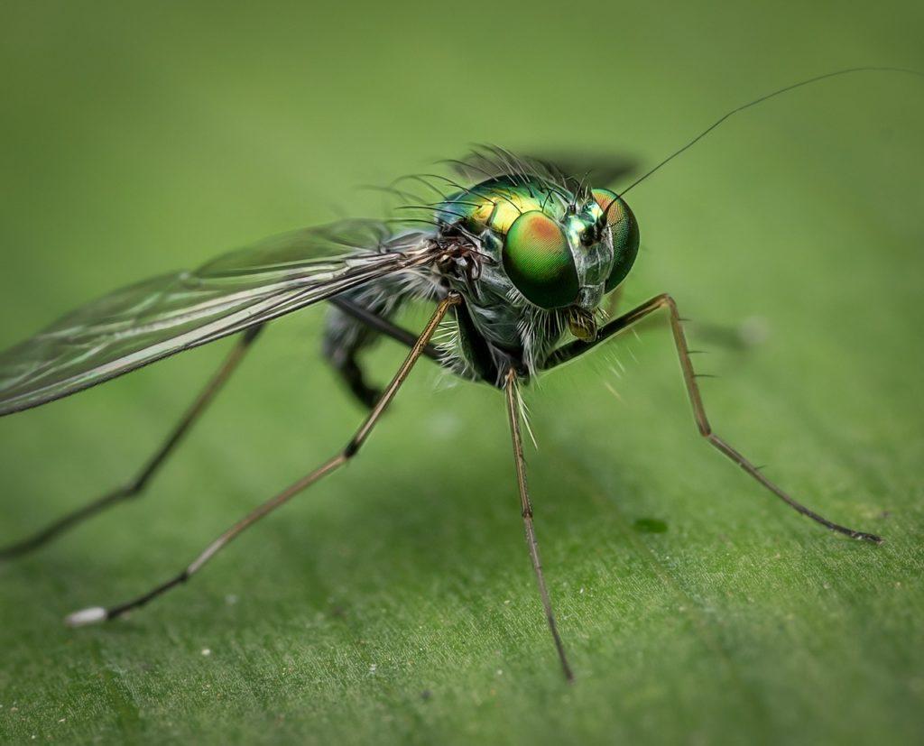Fly Control - Houseflies, Fruitflies, Drainflies - Service