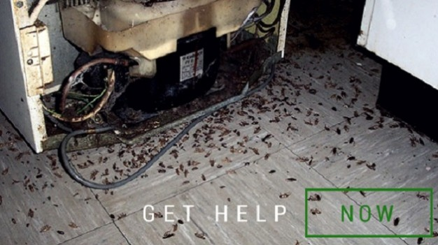 Get-Help-with-Cockroaches-626x351