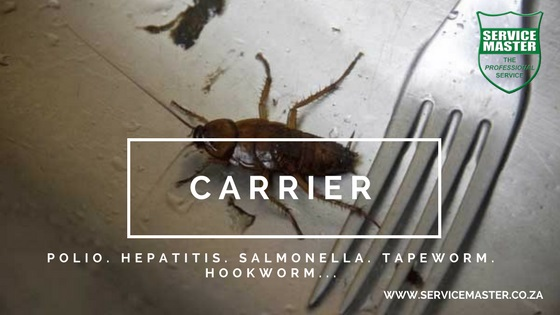 How-to-get-rid-of-Cockroaches-in-Durban