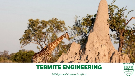 Termite-Engineering