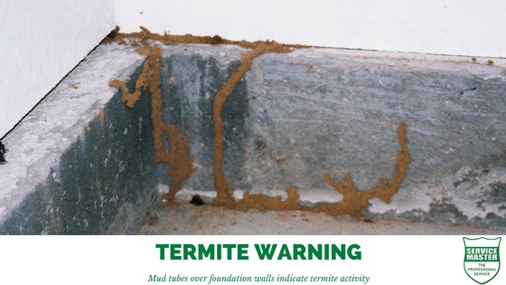 Termite-Warning-Signs