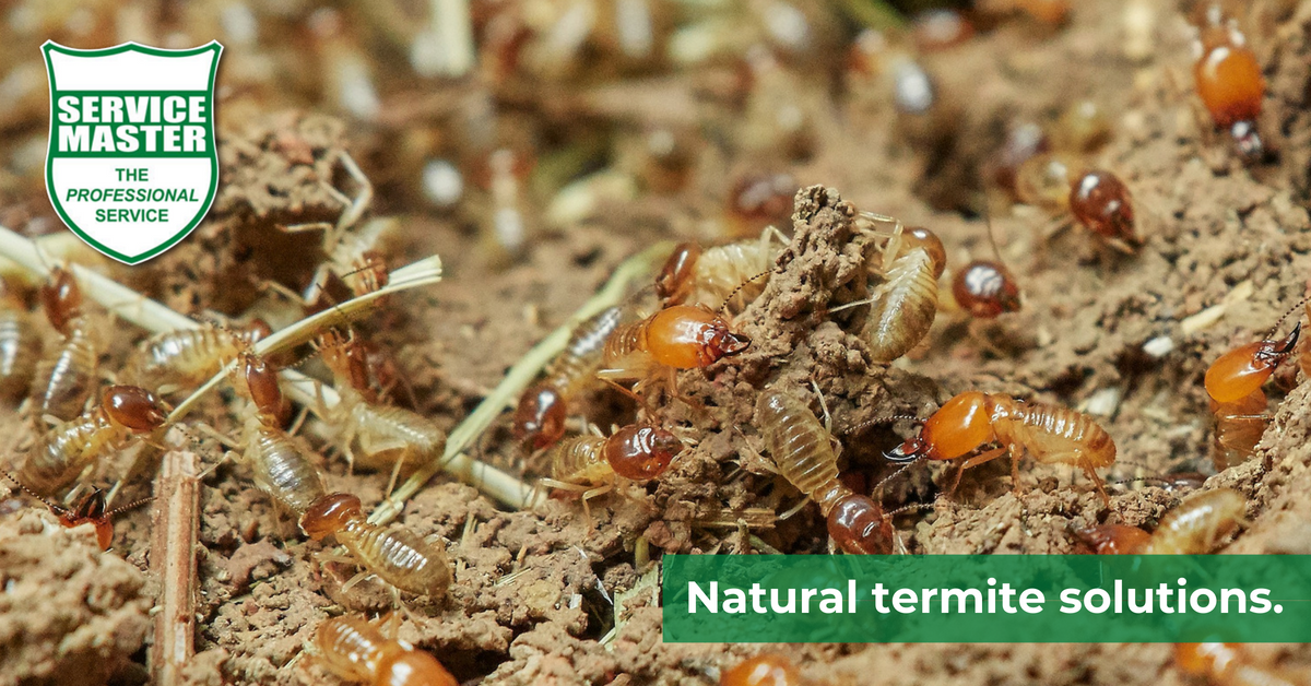 naturally get rid of termites