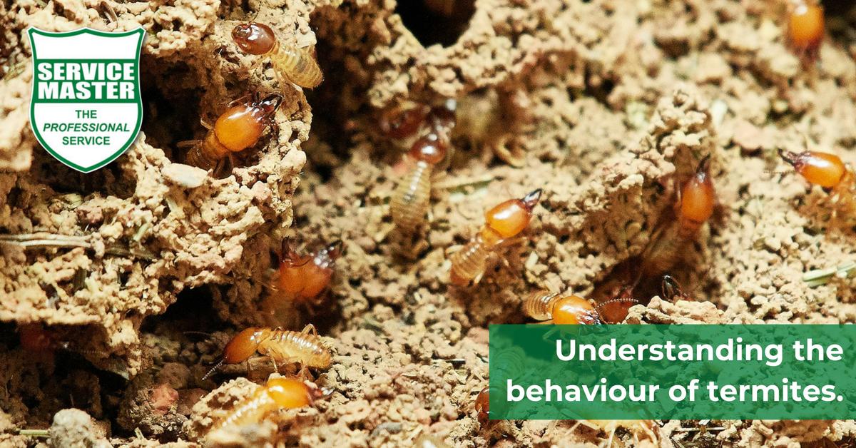 termite article #2
