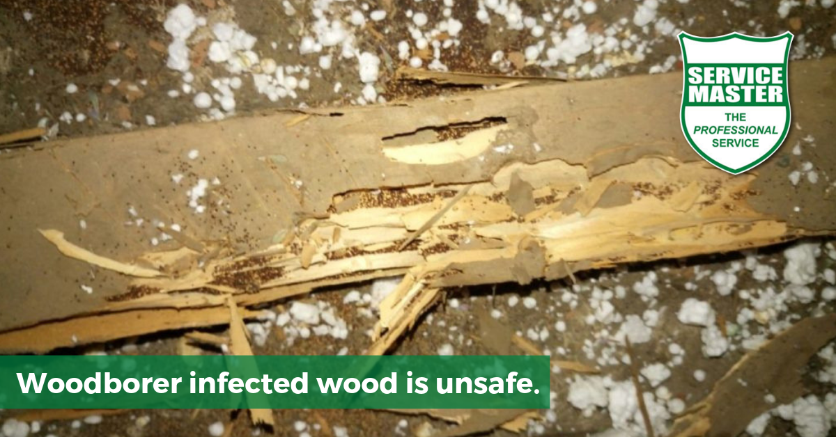 Woodborer Amp Drywood Termite Treatment Service Master