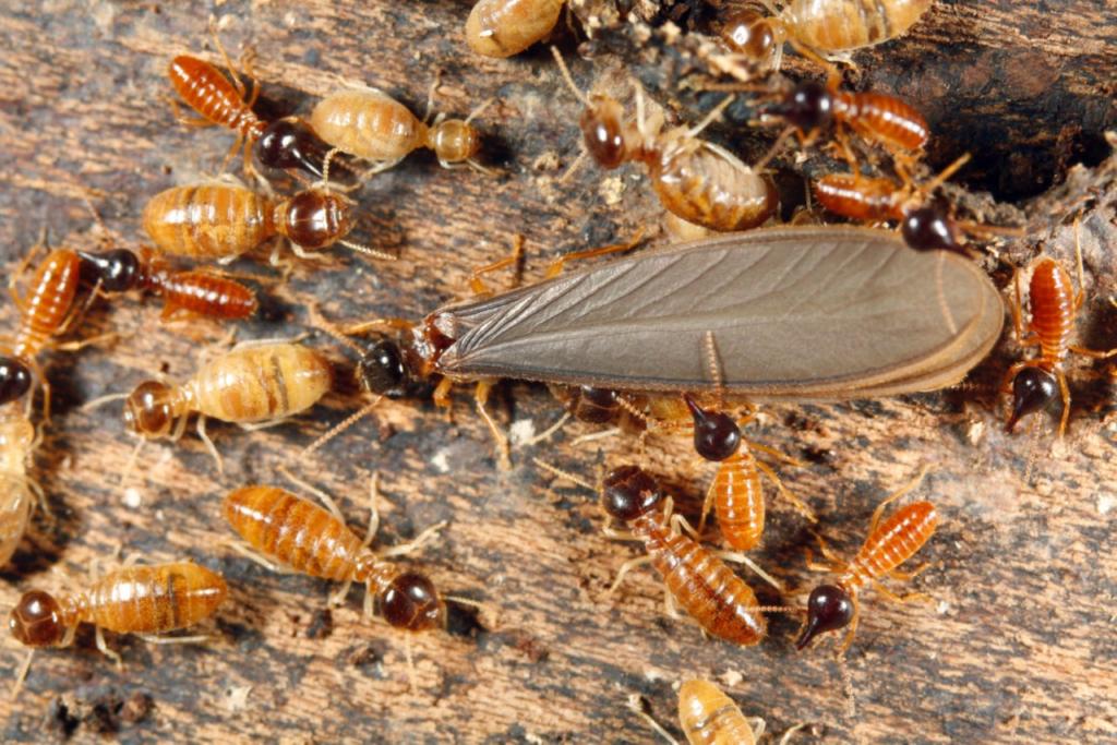 Termite Treatment Service Master