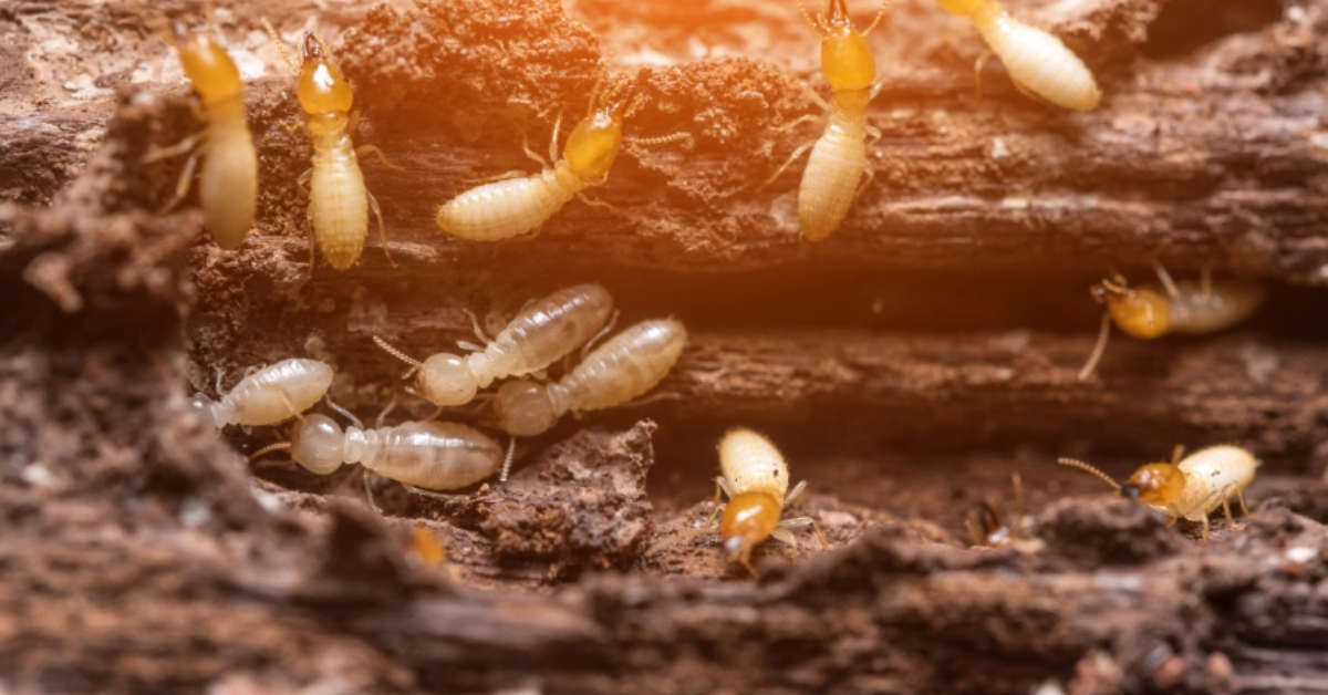 cryptocurrency pictures of termites